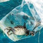 Plasticfree Research